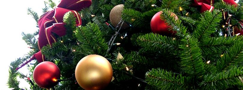 Quelle est l'origine du sapin de Noël?