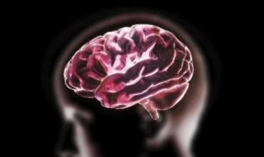 #irmquebec #neuroscience #cerveau